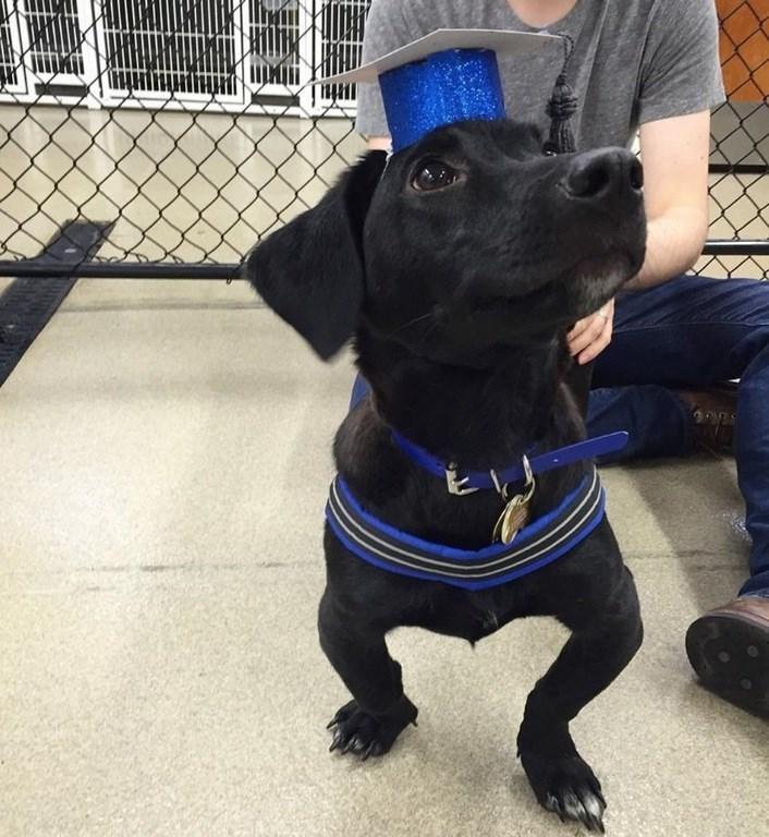 graduation pup