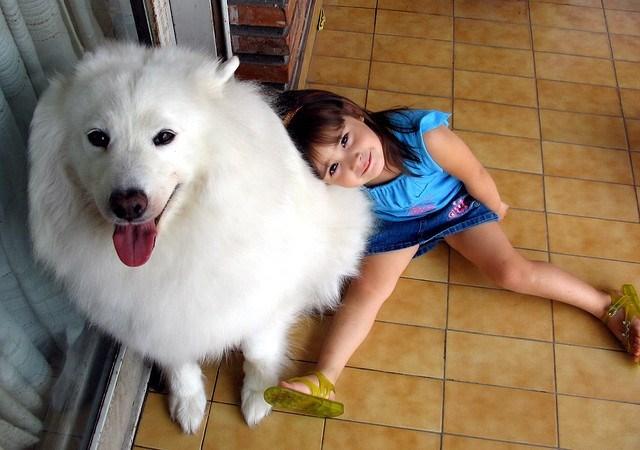 dogs snowball - 8965257216
