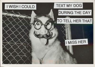 dogs postsecret - 8965257984