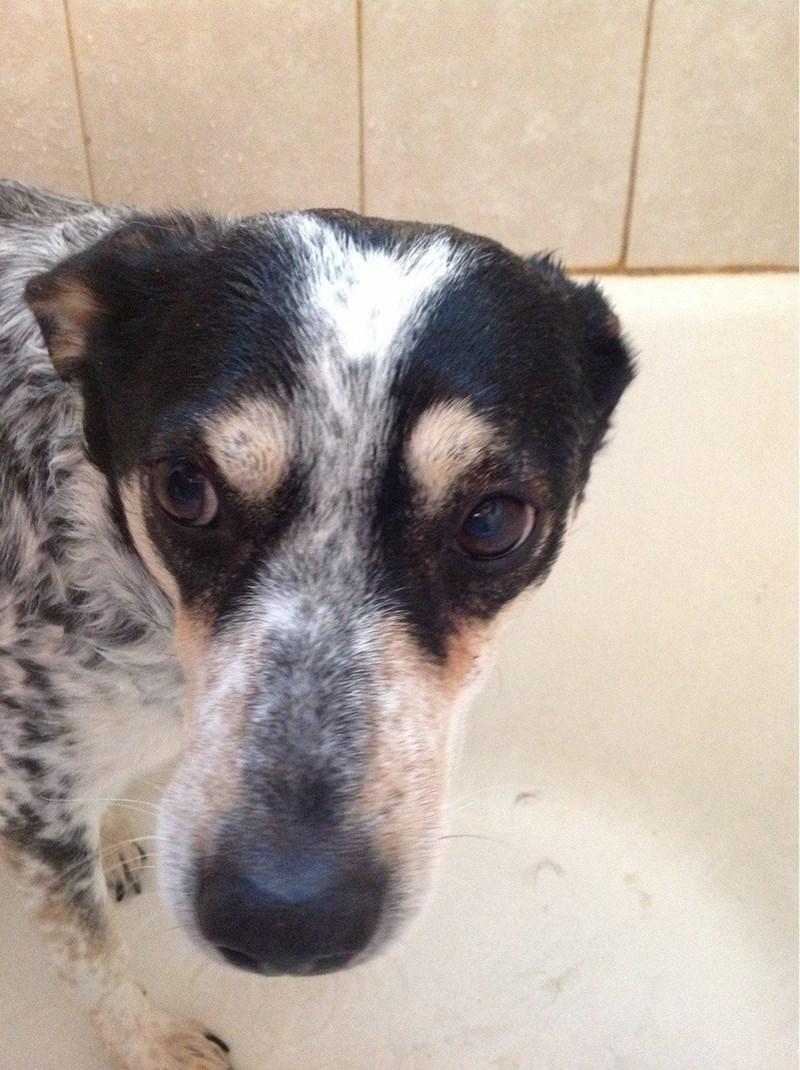 dogs bath - 8965258496