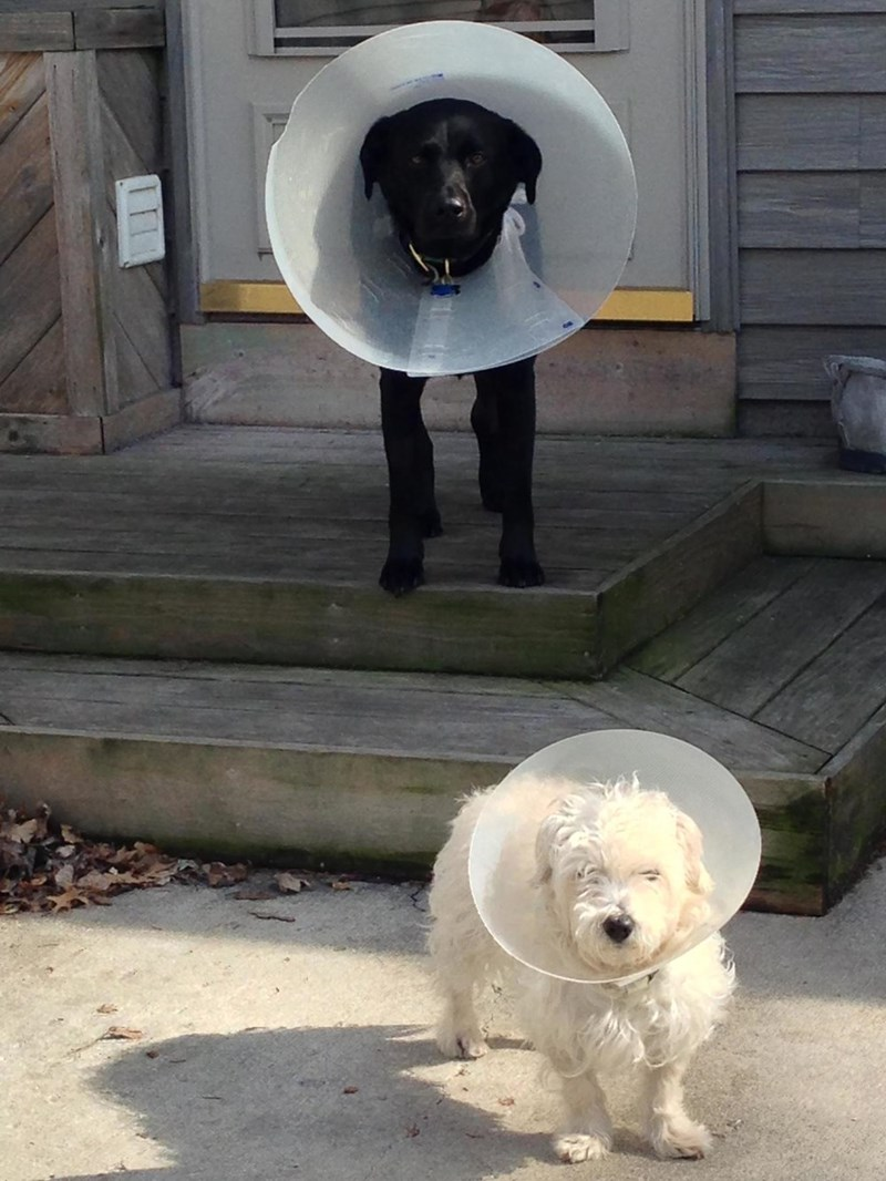 dogs cone of shame - 8965258752
