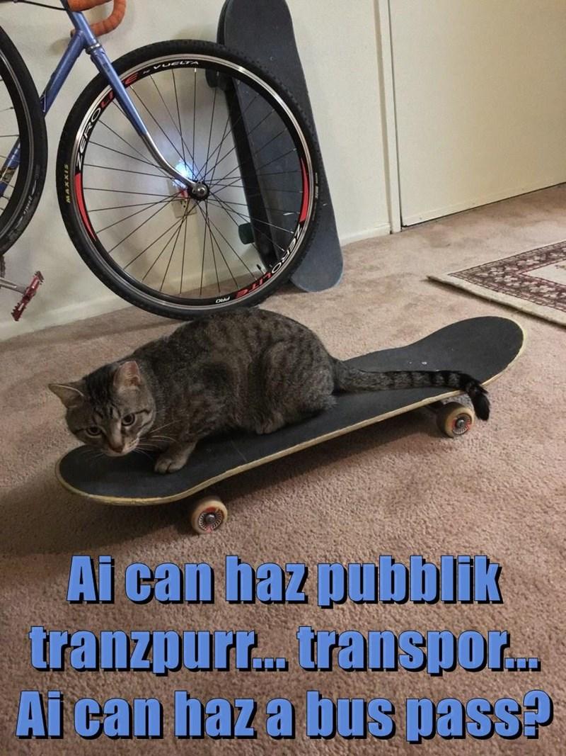 Ai can haz pubblik tranzpurr... transpor... Ai can haz a bus pass?