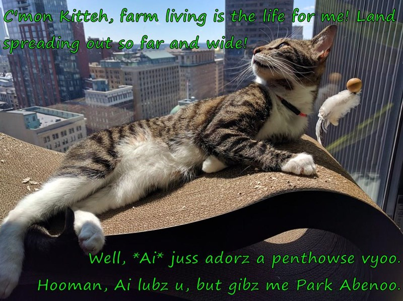C'mon Kitteh, farm living is the life for me! Land spreading out so far and wide!  Well, *Ai* juss adorz a penthowse vyoo.                                Hooman, Ai lubz u, but gibz me Park Abenoo.