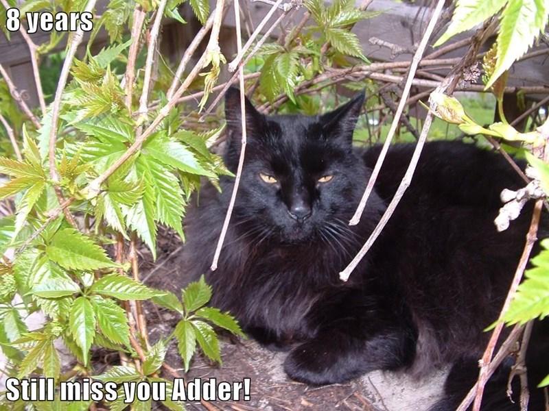 8 years  Still miss you Adder!