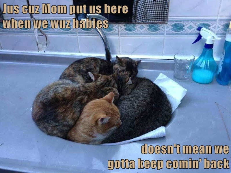 Jus cuz Mom put us here                                                   when we wuz babies                                                          doesn't mean we gotta keep comin' back