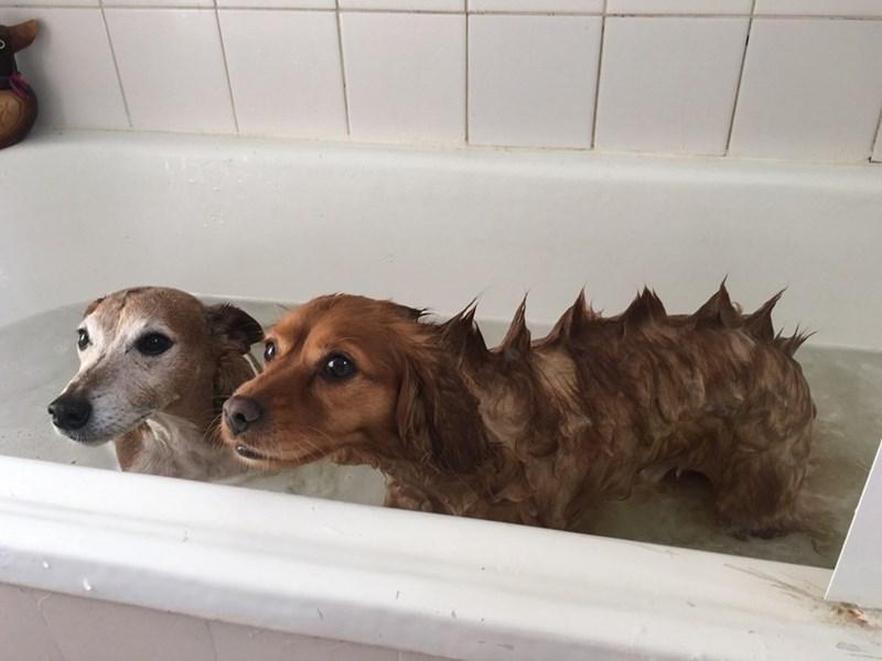doggosaurus