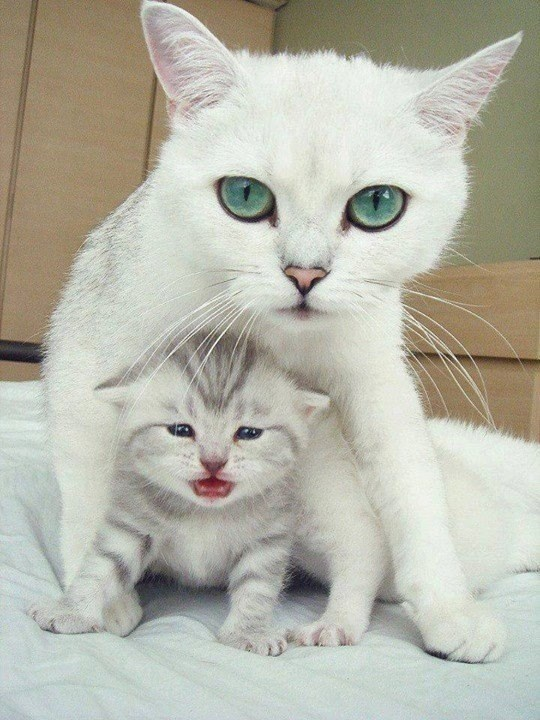 dont talk to me or my son ever again cats