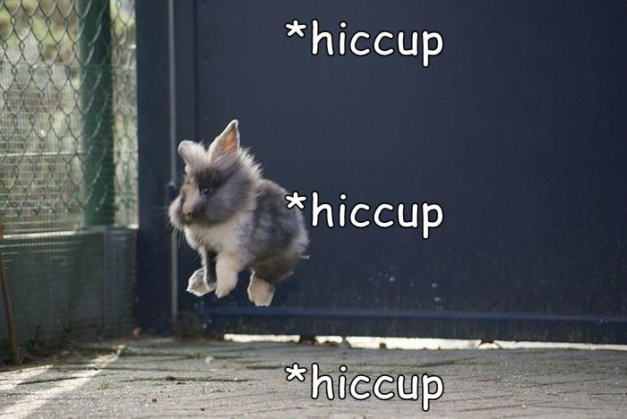 hiccup rabbit meme