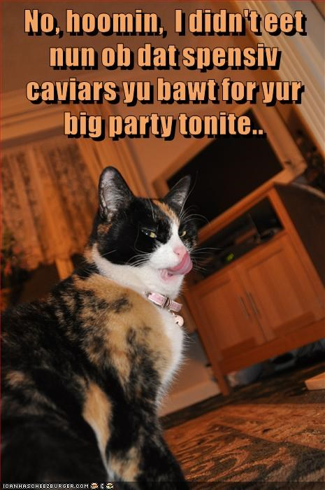 No, hoomin,  I didn't eet nun ob dat spensiv caviars yu bawt for yur big party tonite..
