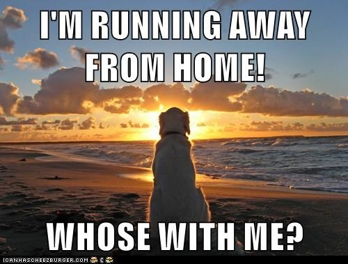 I M Running Away From Home Whose With Me I Has A Hotdog Dog Pictures Funny Pictures Of Dogs Dog Memes Puppy Pictures Doge
