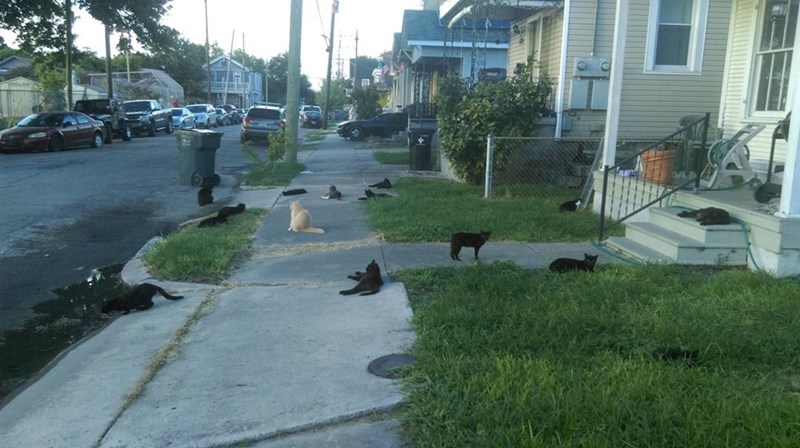 neighborhood Cats - 8965545216
