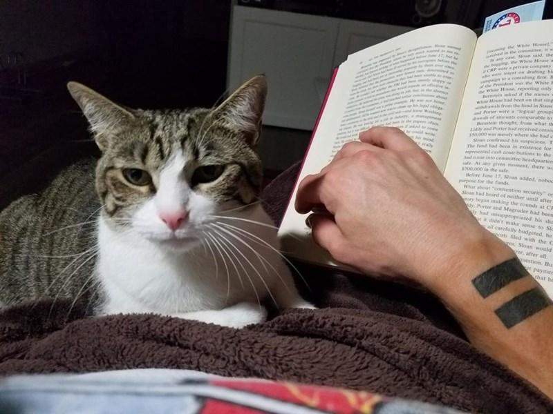 reading Cats - 8965550848
