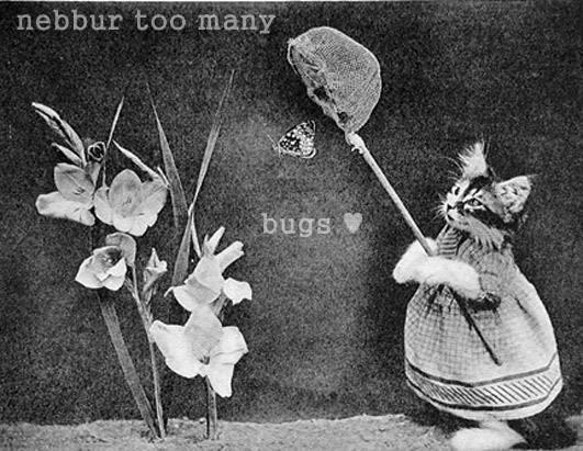 nebbur too many     bugs ♥