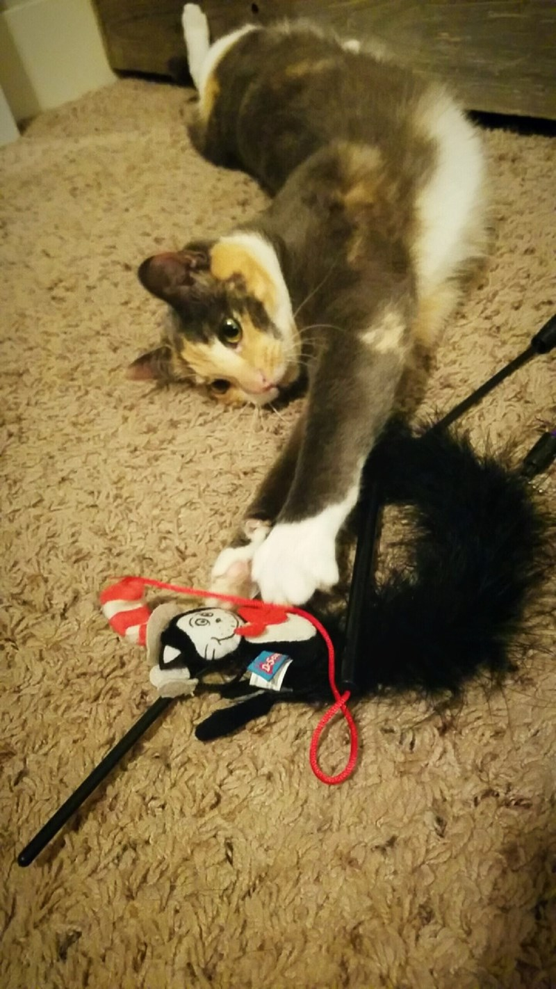 toys Cats