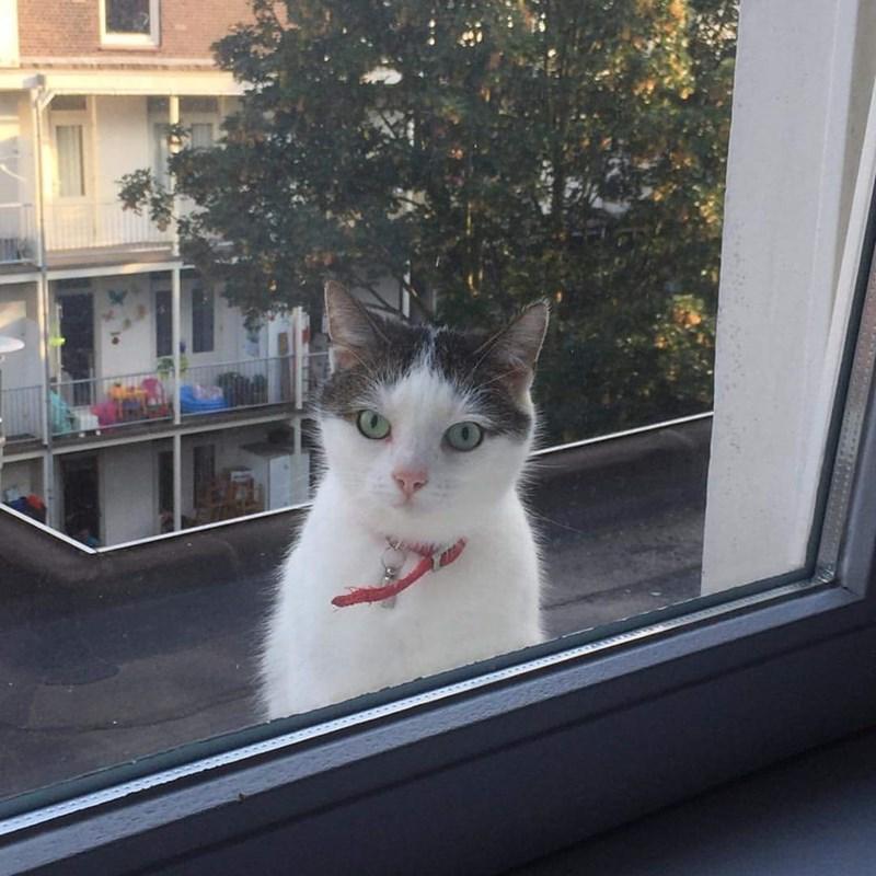 Cats creep window - 8965604096