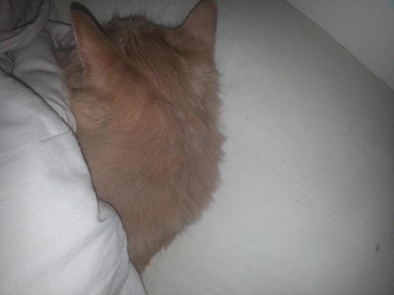sleep,Cats