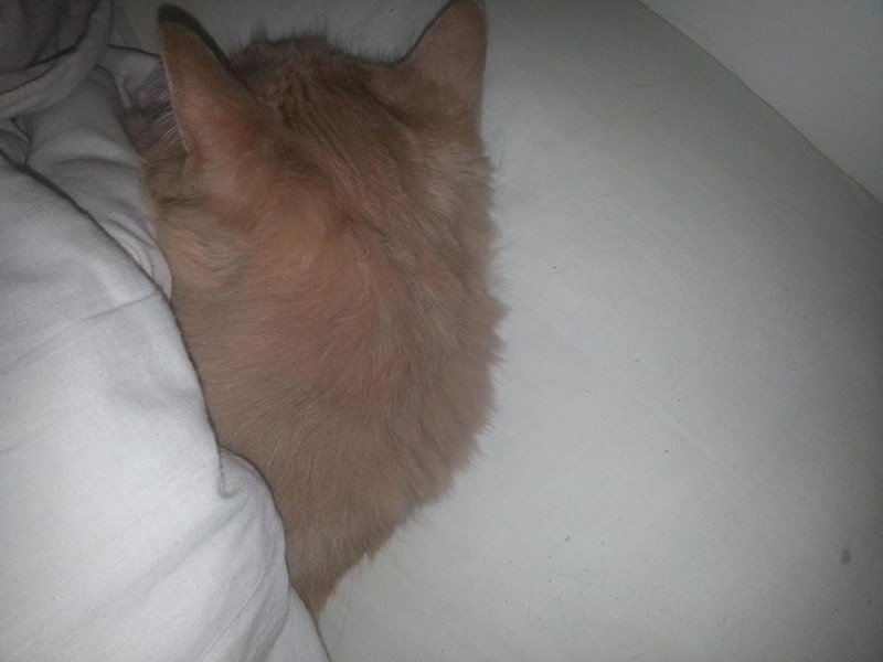 Cat sleeping all sneaky under the covers.