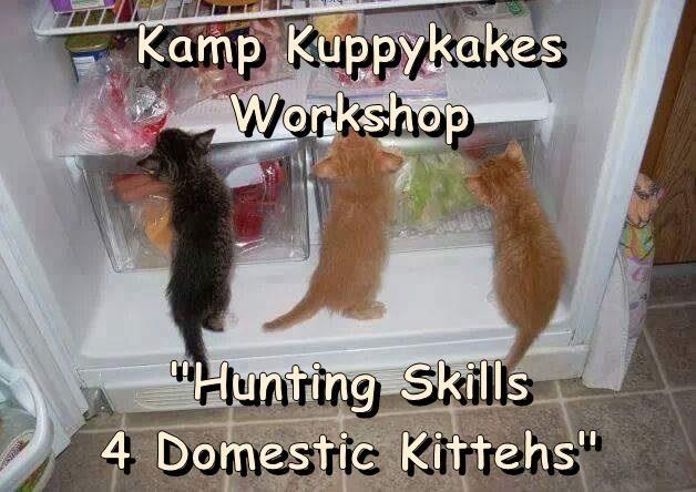 """Kamp Kuppykakes Workshop  """"Hunting Skills                                         4 Domestic Kittehs"""""""