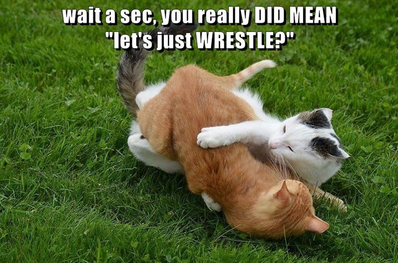 """wait a sec, you really DID MEAN                                                  """"let's just WRESTLE?"""""""