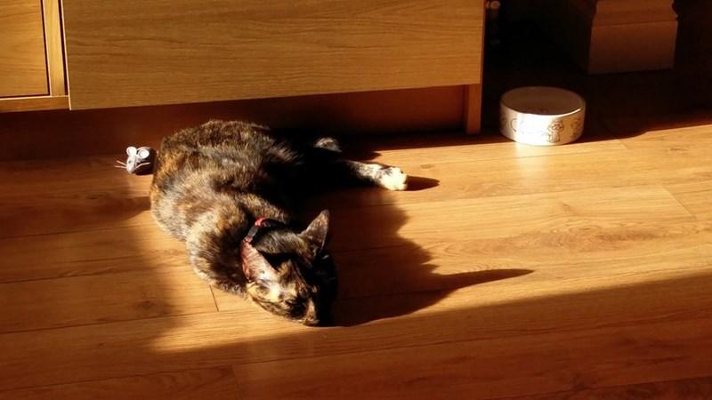 sunlight Cats - 8965657344