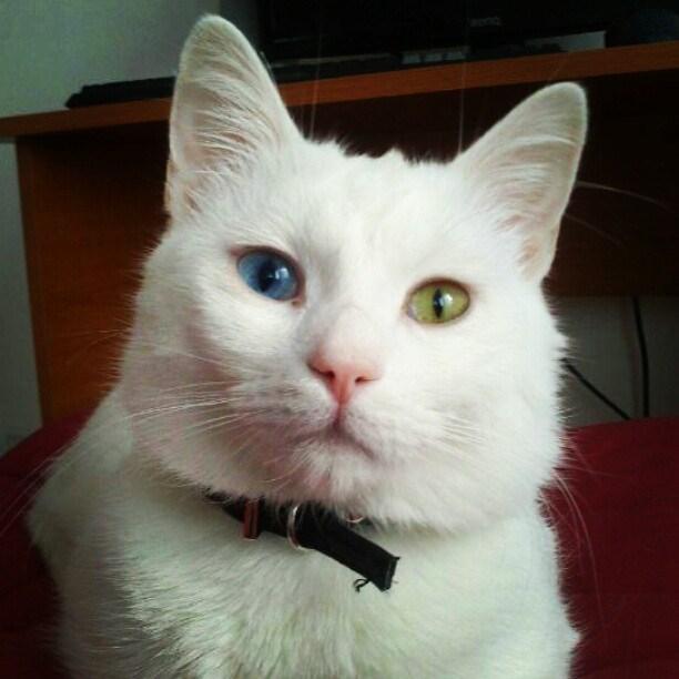 eyes Cats - 8965667584