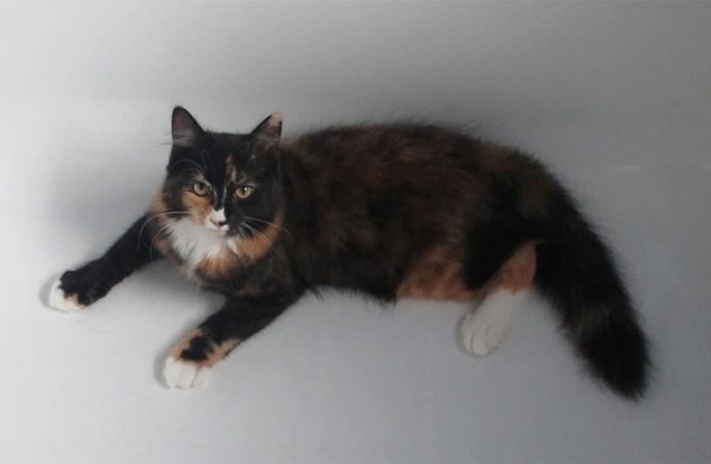 bathtub Cats - 8965667840