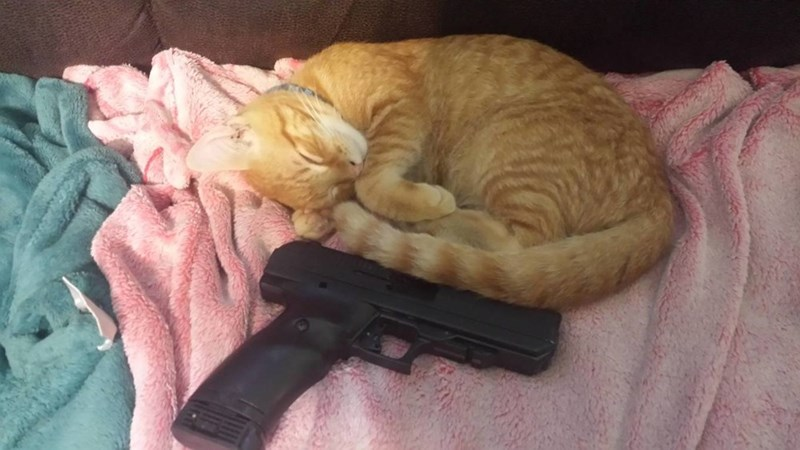 Picture of a cute cat sleeping all curled up in a ball next to a loaded 9mm Glock hand-gun.