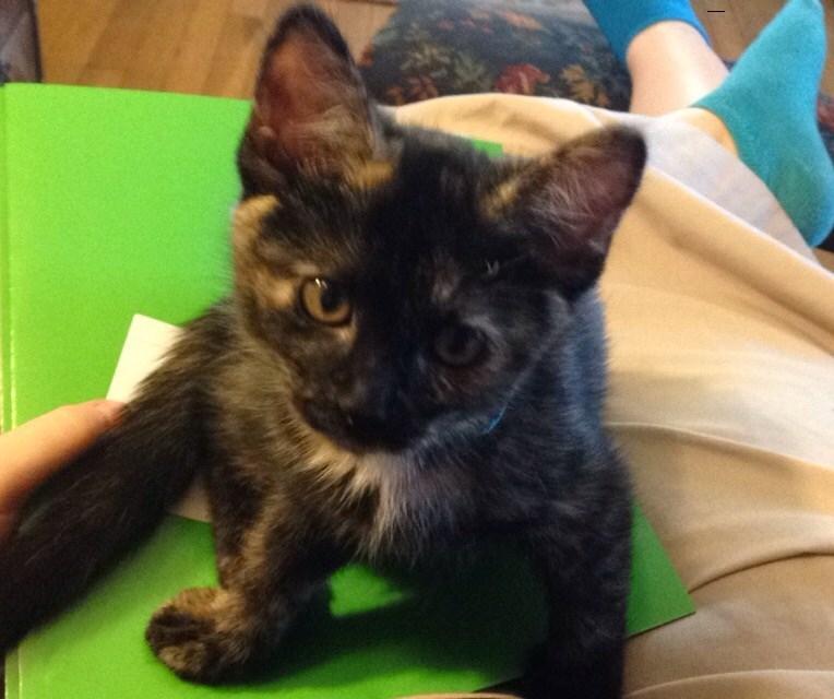 kitten Cats - 8965689856