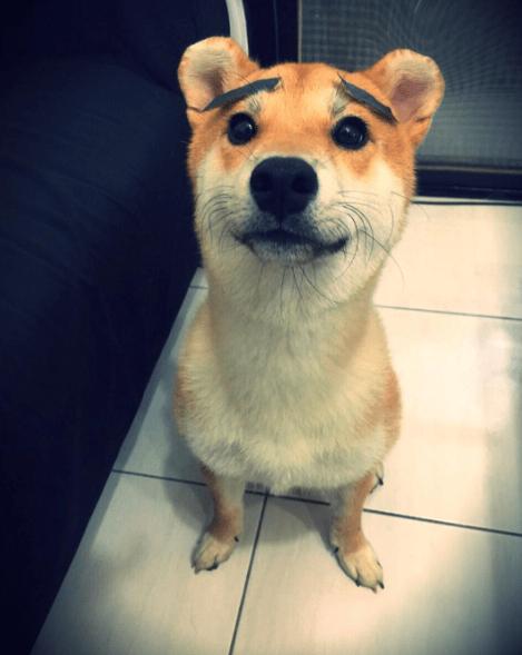 mouse ears - Dog