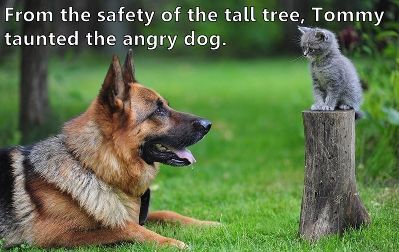 animals cat dogs taunted angry tree caption safety - 8965710848