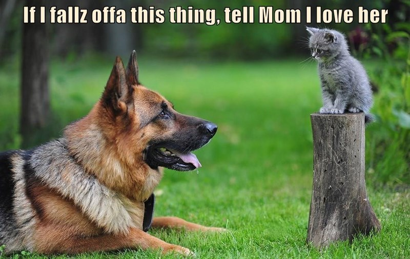 animals cat her love caption falls mom tell - 8965721600