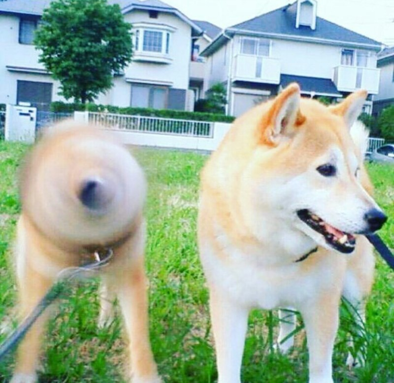 such speed very shake wow