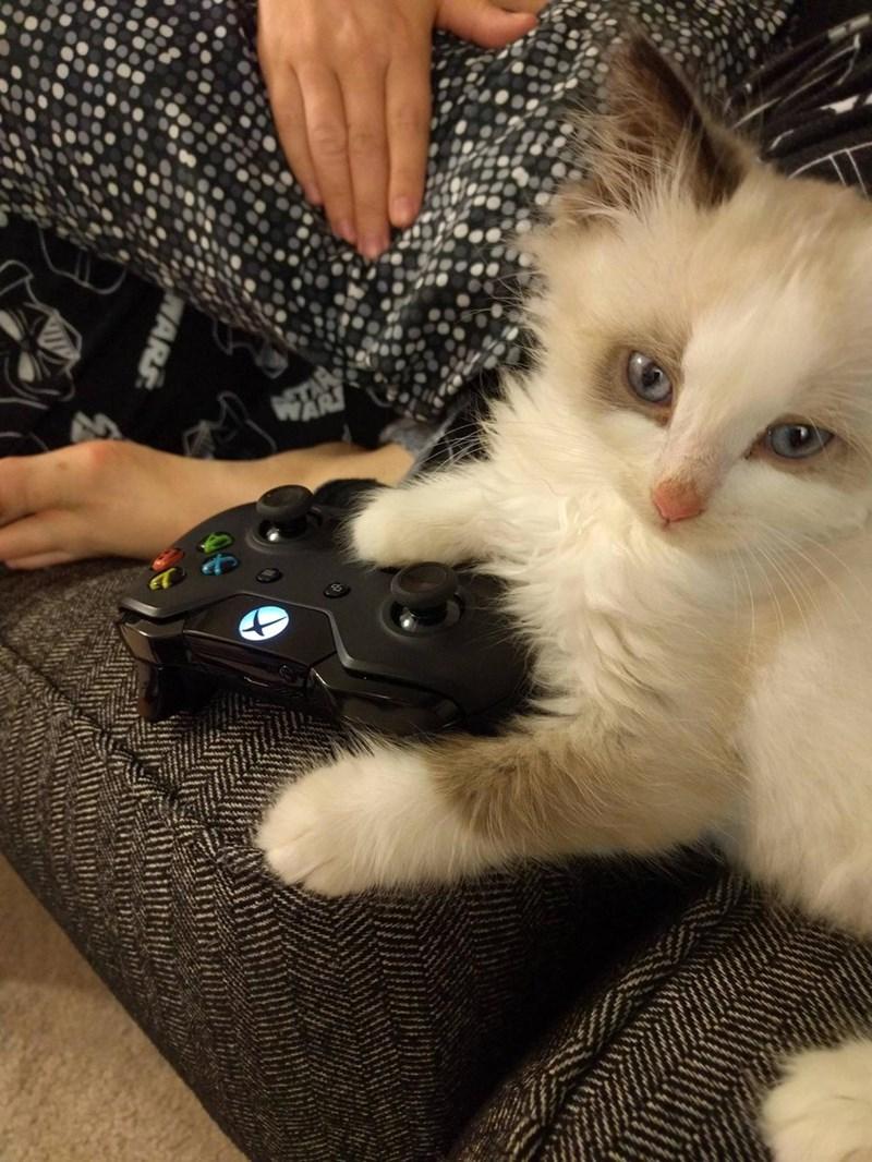 xbox,Cats