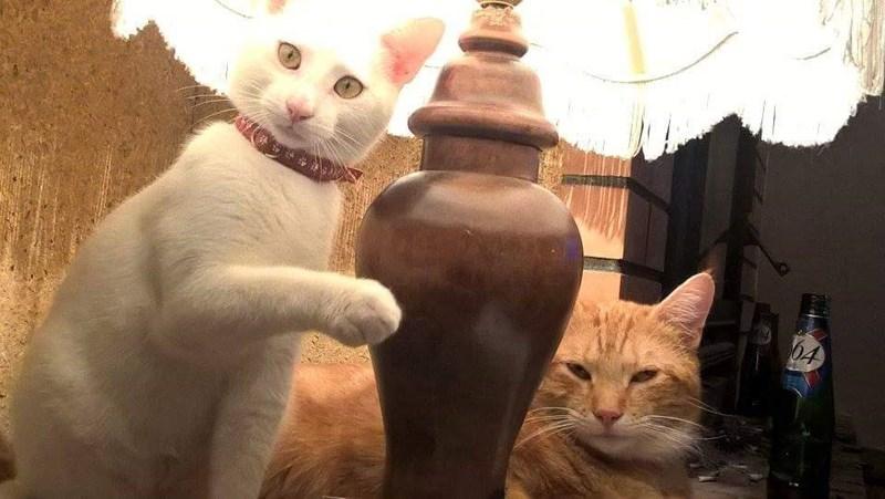 lamp Cats - 8965742336