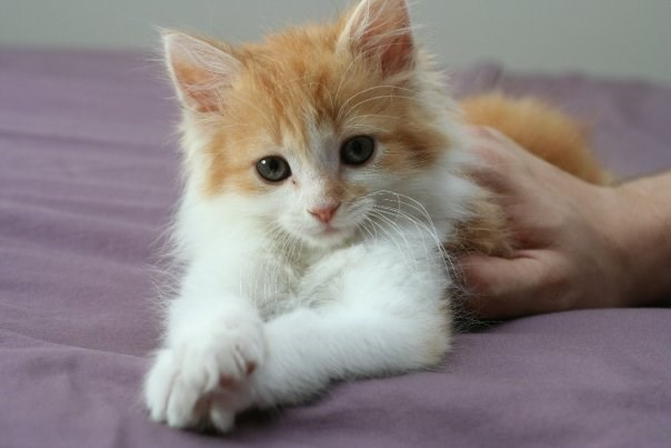 The Cutest Kitten Cats N Kittens Cat Pictures Cute Kittens