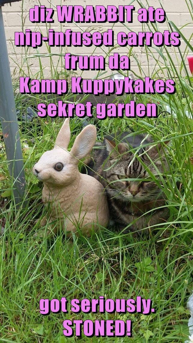 diz WRABBIT ate                      nip-infused carrots                        frum da                     Kamp Kuppykakes sekret garden  got seriously.                    STONED!