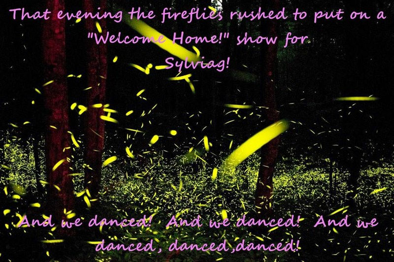 """That evening the fireflies rushed to put on a   """"Welcome Home!"""" show for                                              Sylviag!  And we danced!  And we danced!  And we danced, danced,danced!"""
