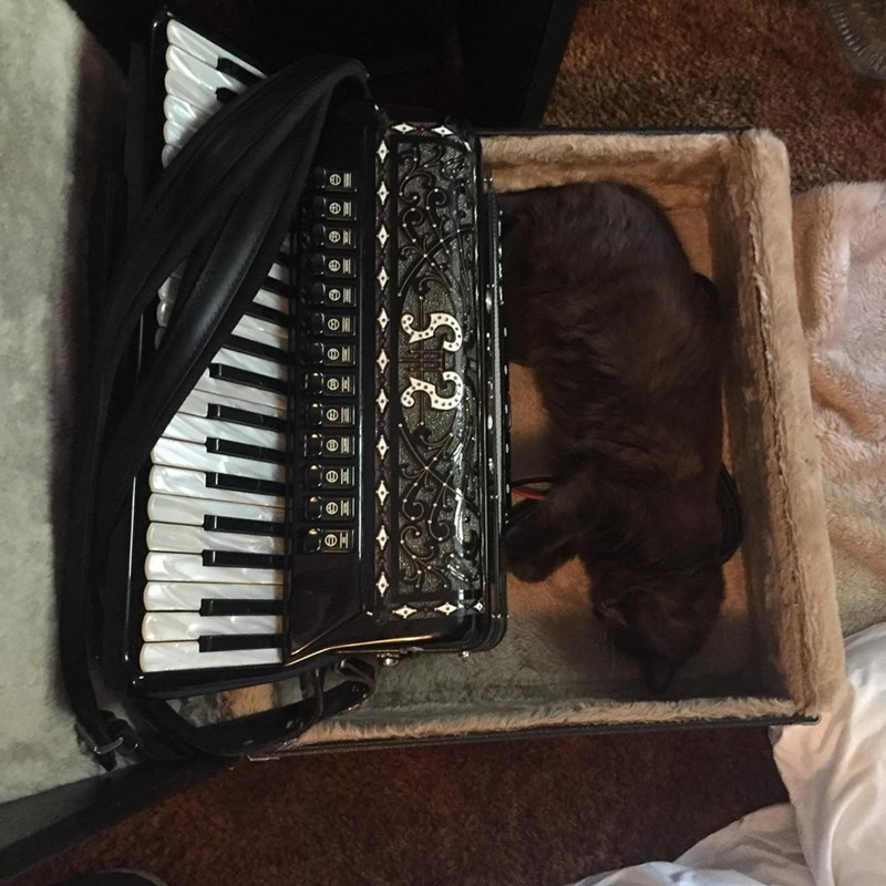 accordion,Cats