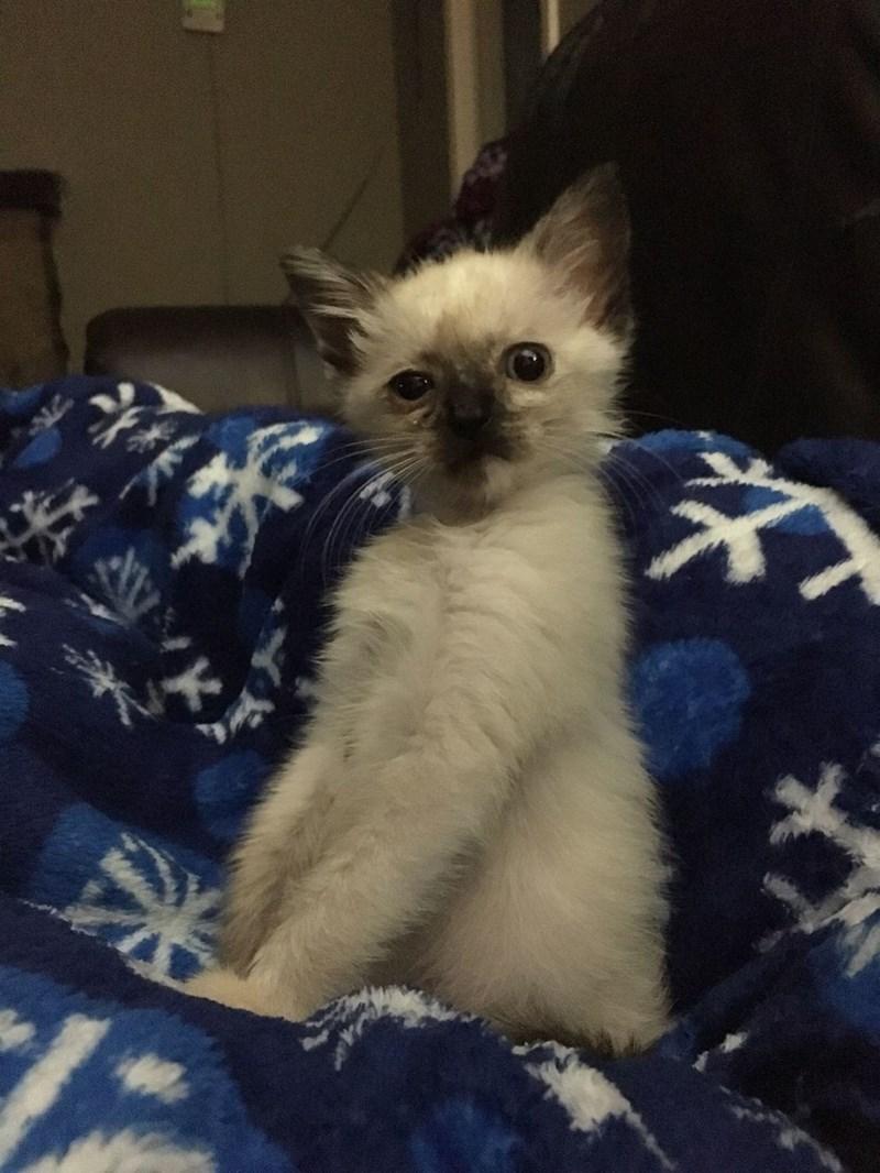 kitten Cats - 8965873920