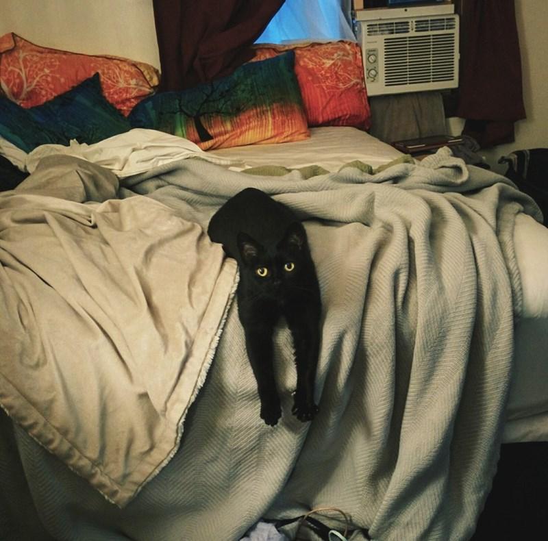 Cats edge - 8965886464