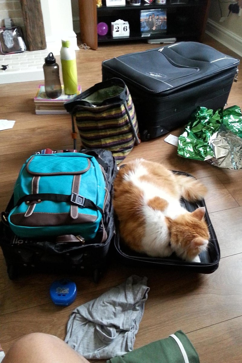 packing Cats - 8965886720