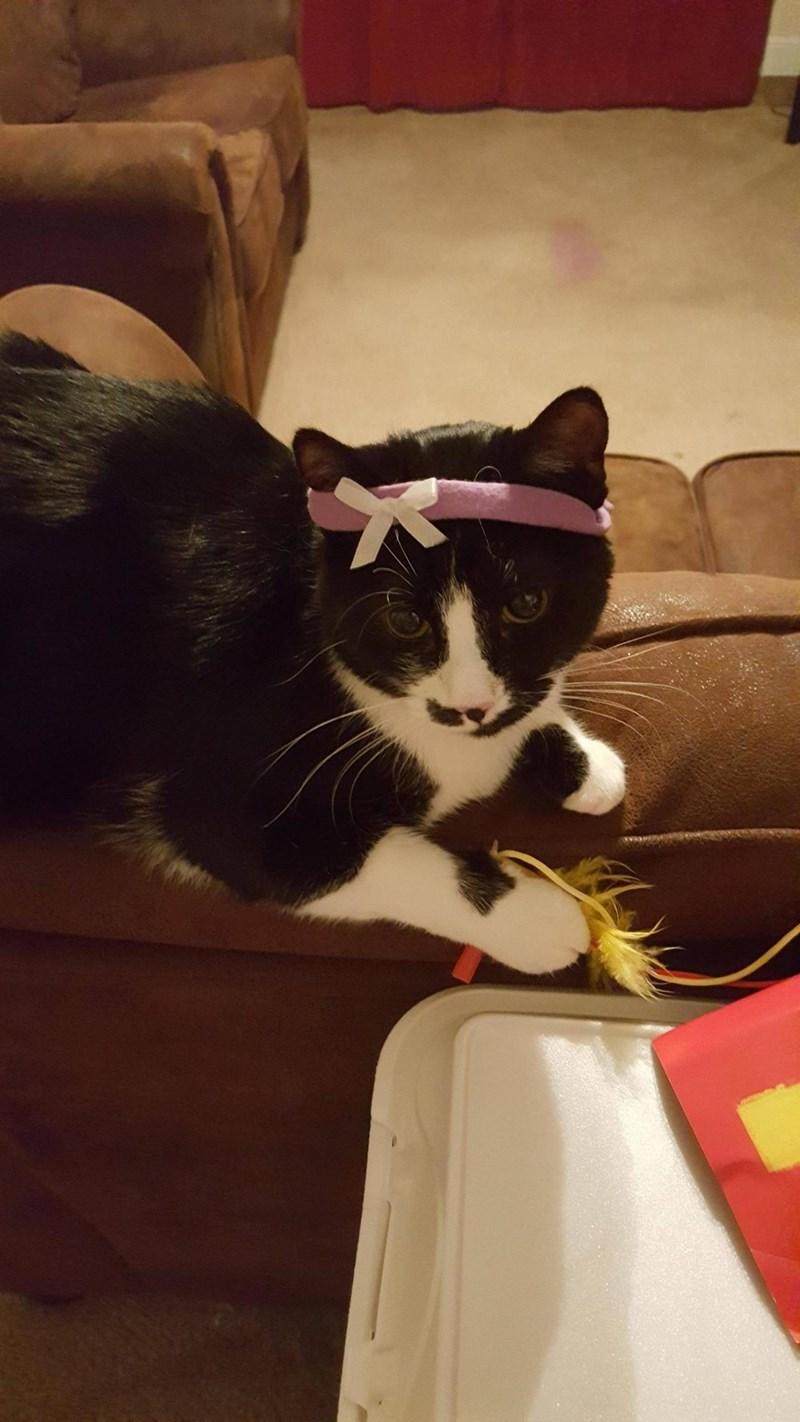 headband Cats - 8965895168