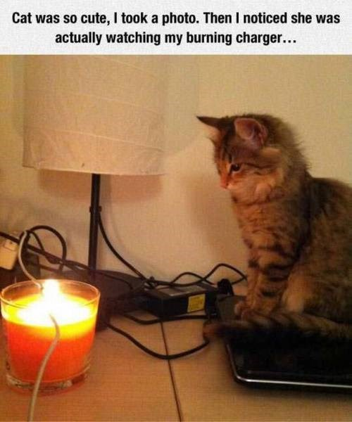 some cats just want to watch the world burn