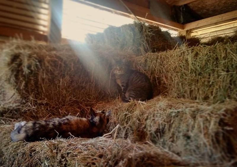 Cats barn