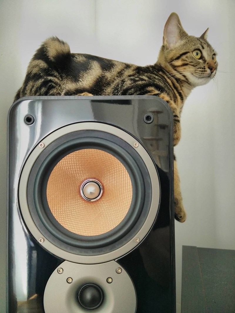 Music,Cats
