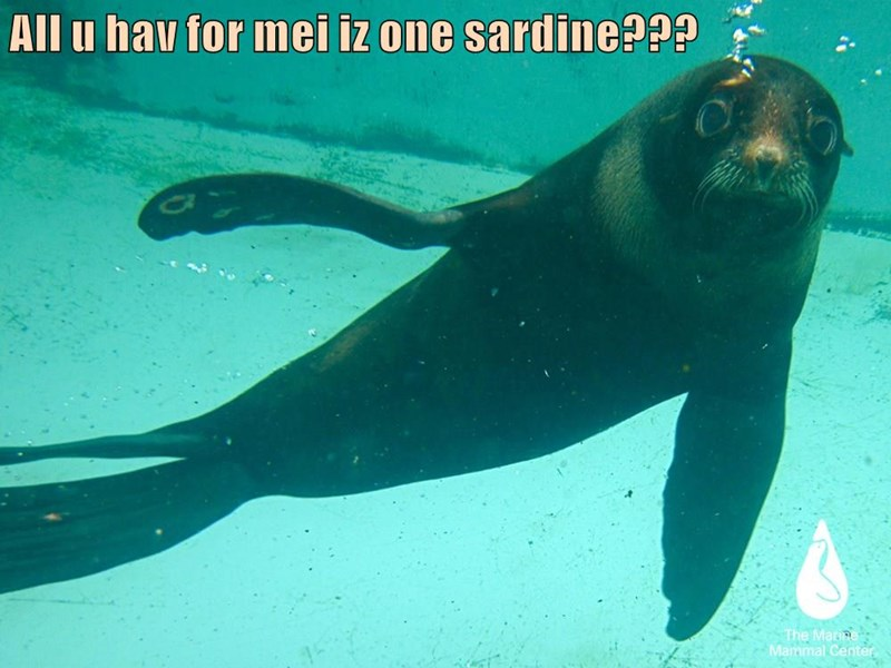 All u hav for mei iz one sardine???