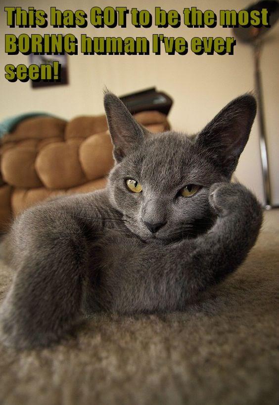 animals cat most boring ever seen human caption - 8966032896