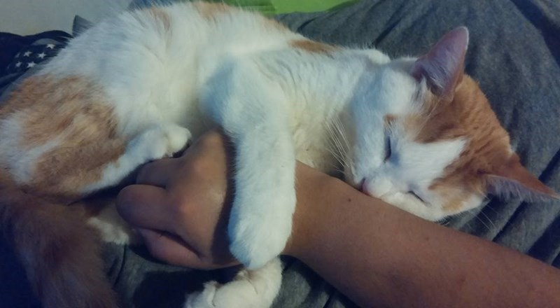 arm Cats - 8966071296