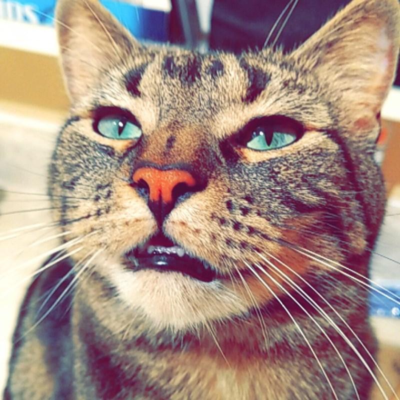Cats - 8966091776