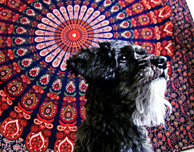 dogs beard - 8966097408